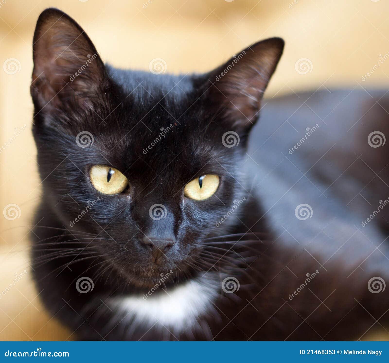 Cats Eye Sofa