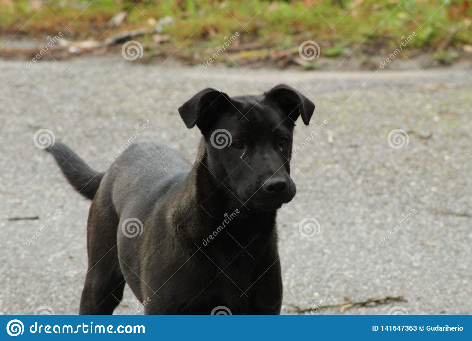 Cute black and grey dogs