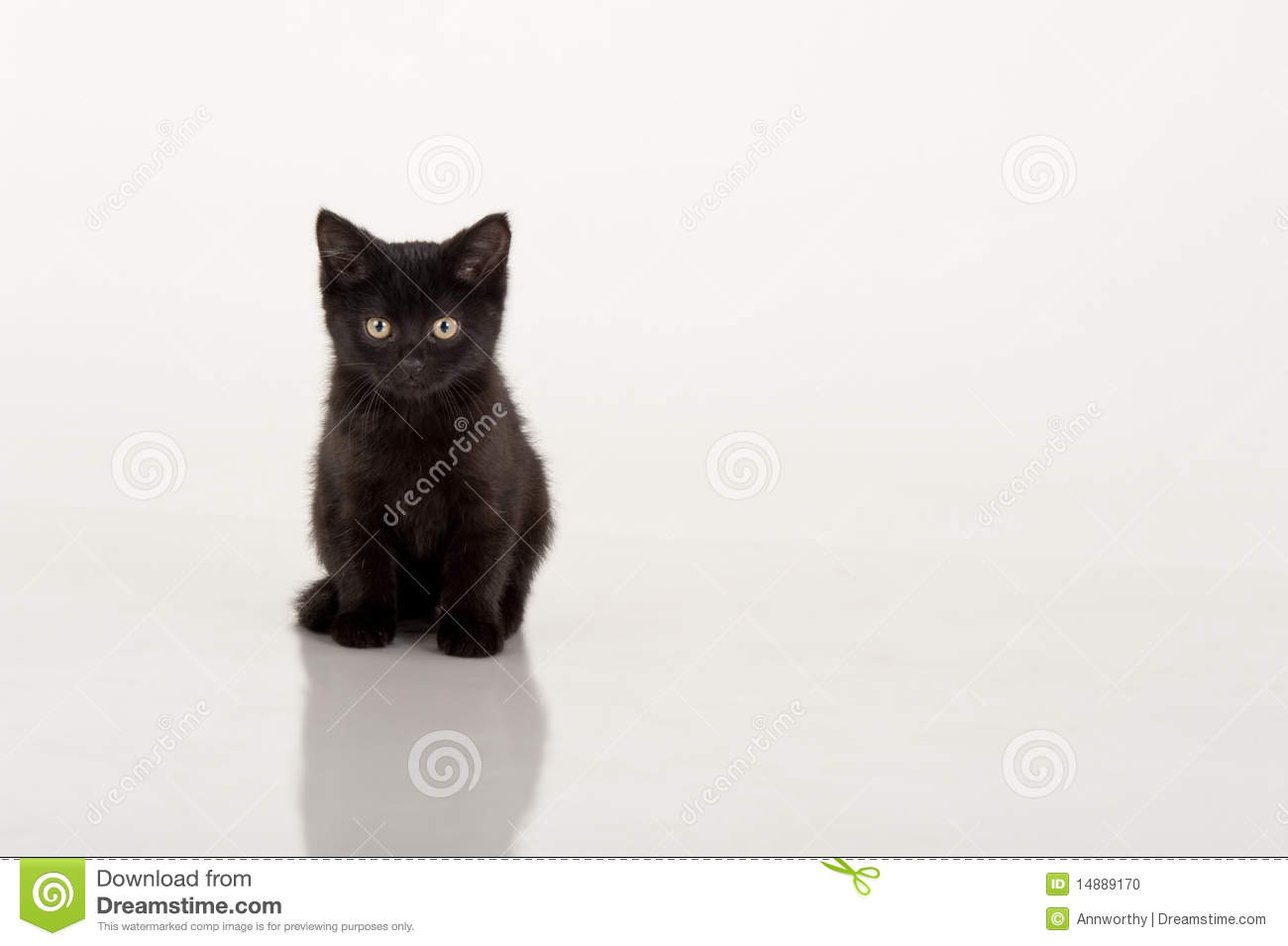 Cute Black Kitten Against White Background Stock Photo - Image ...