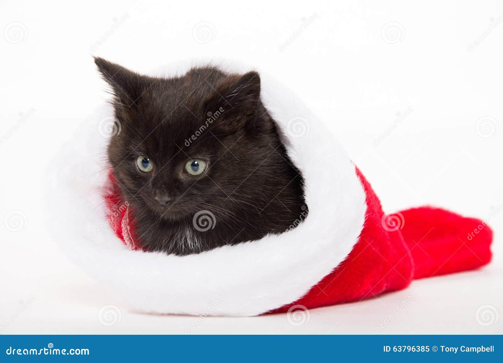 Cute Black Kitten In Christmas Stocking Stock Image
