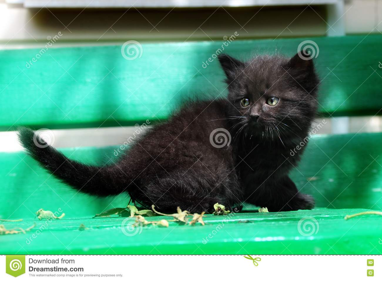 Cute Black Kitten A Table Stock Image Image