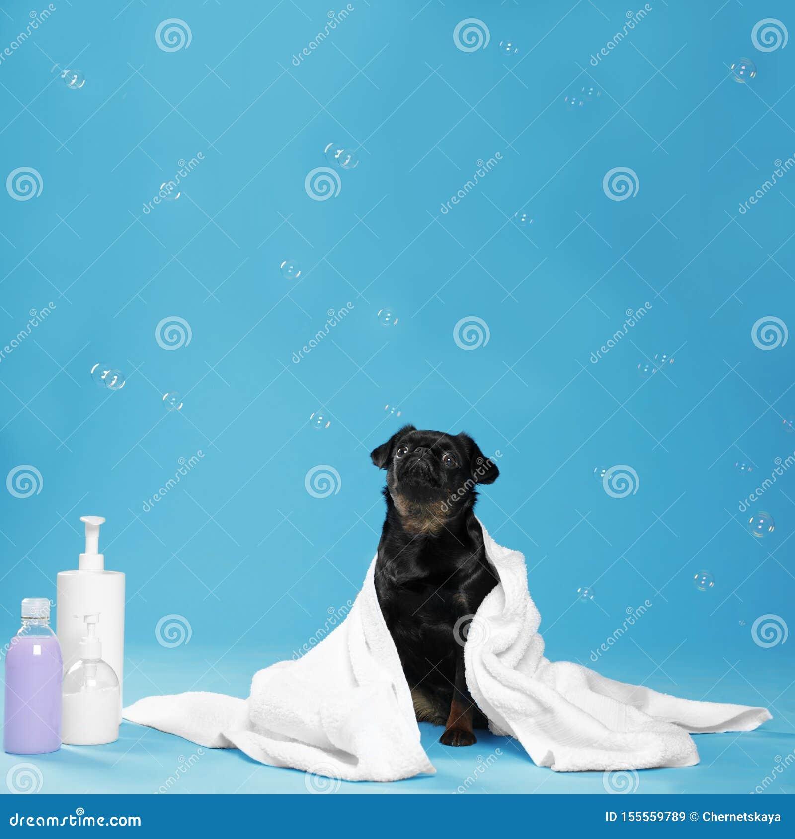 Cute black Petit dog, bath accessories and bubbles on light blue background