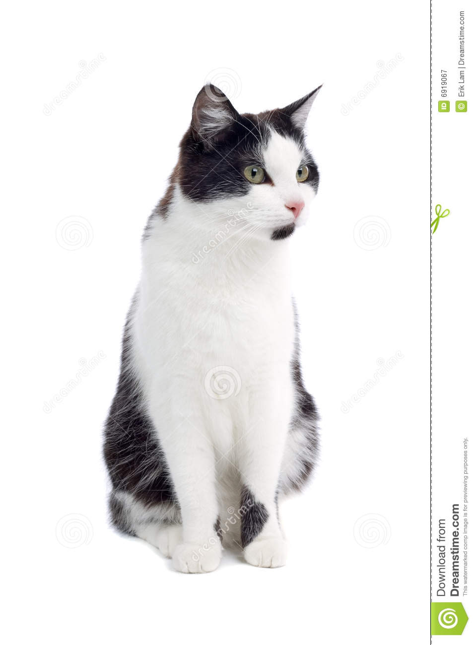 Cute Black And White Cat Stock Image Image Of Details 6919067