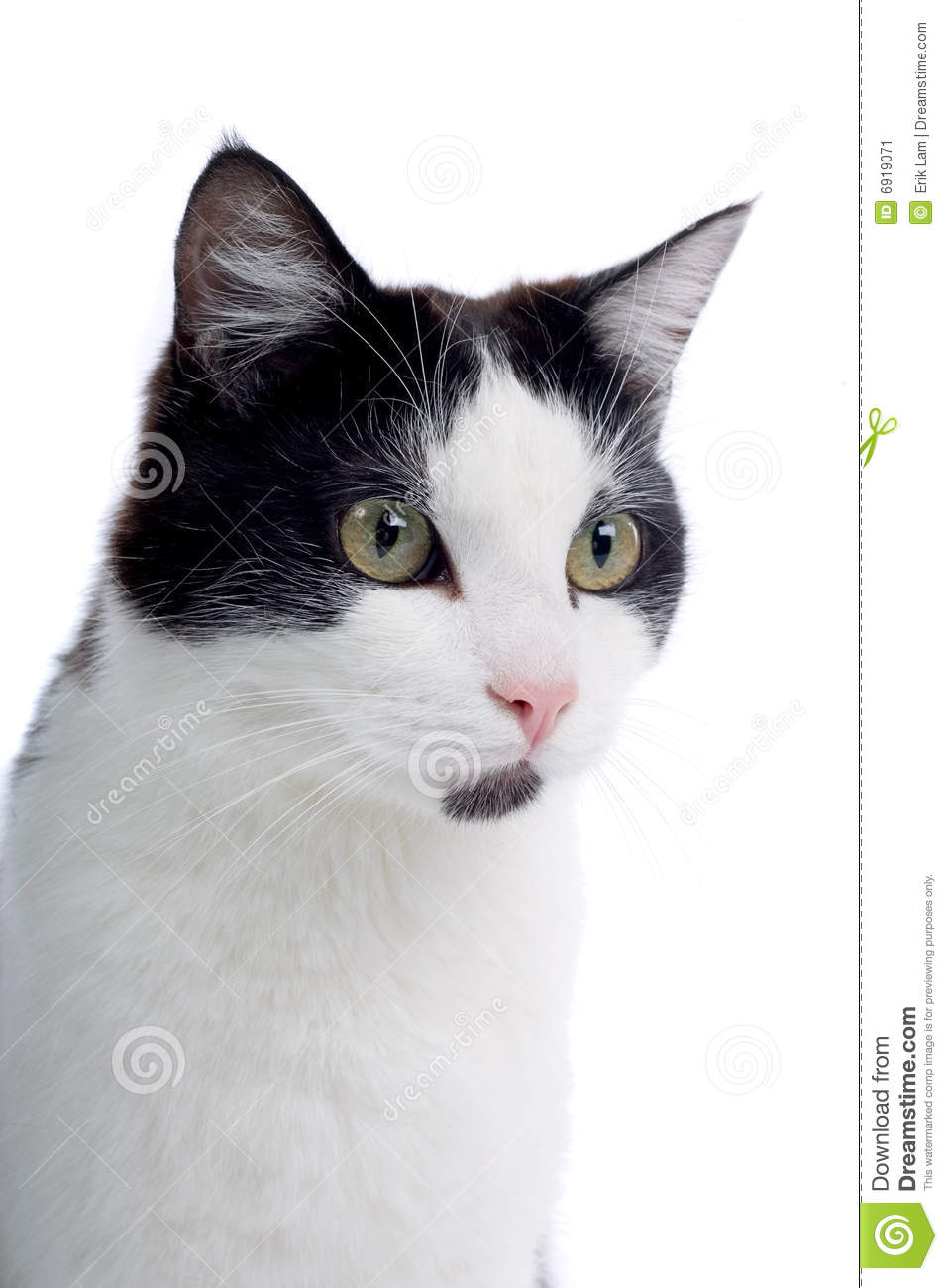 Cute Black And White Cat Stock Image Image Of Indoors 6919071
