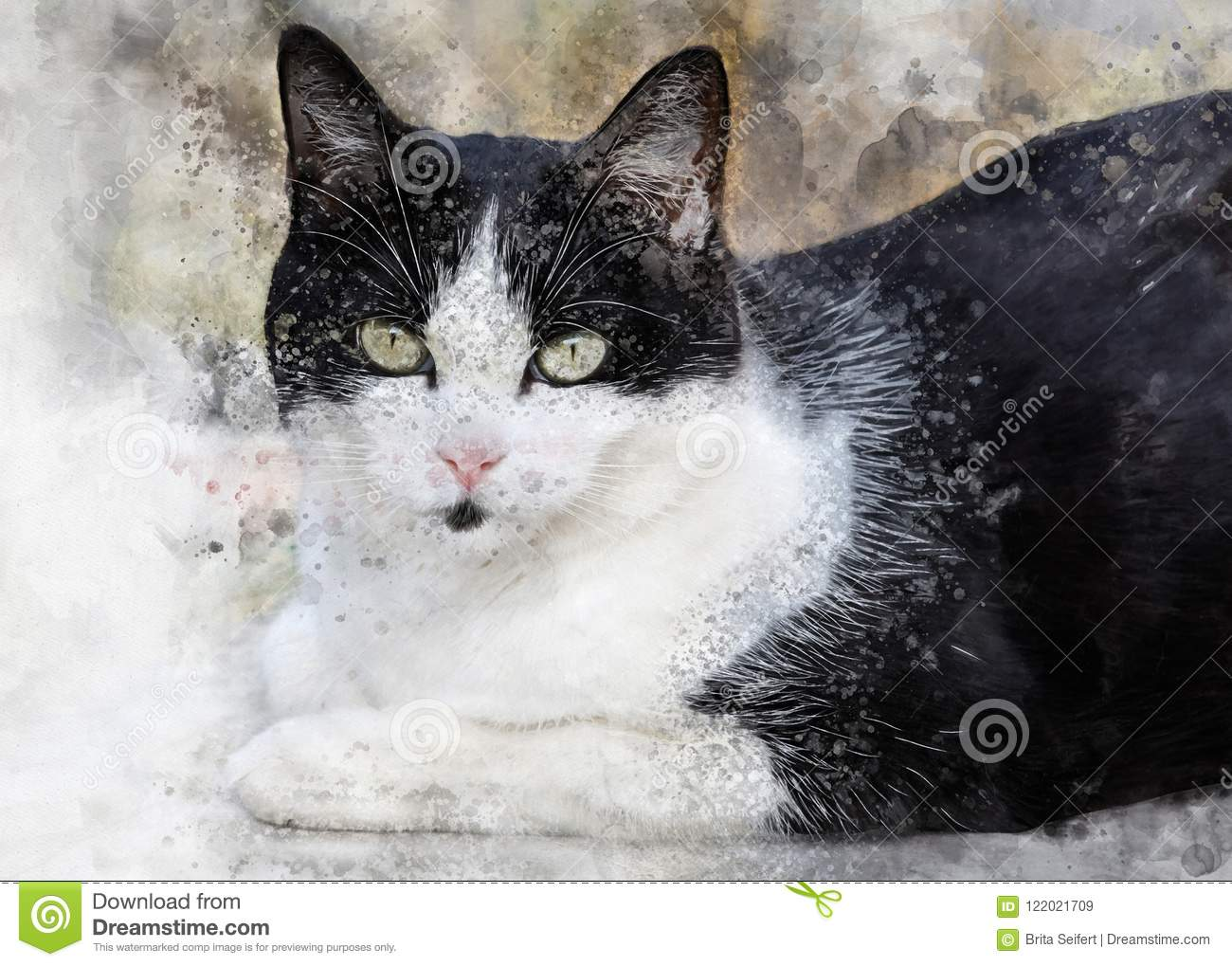 Cute black and white cat with big eyes stock image image of