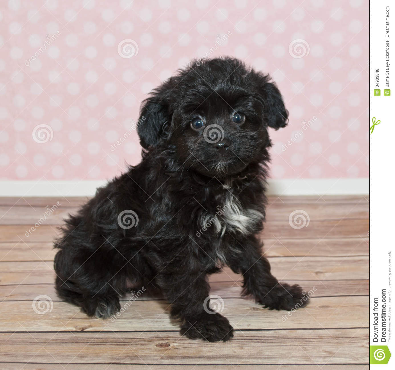 cute black and white puppy stock photo image of card