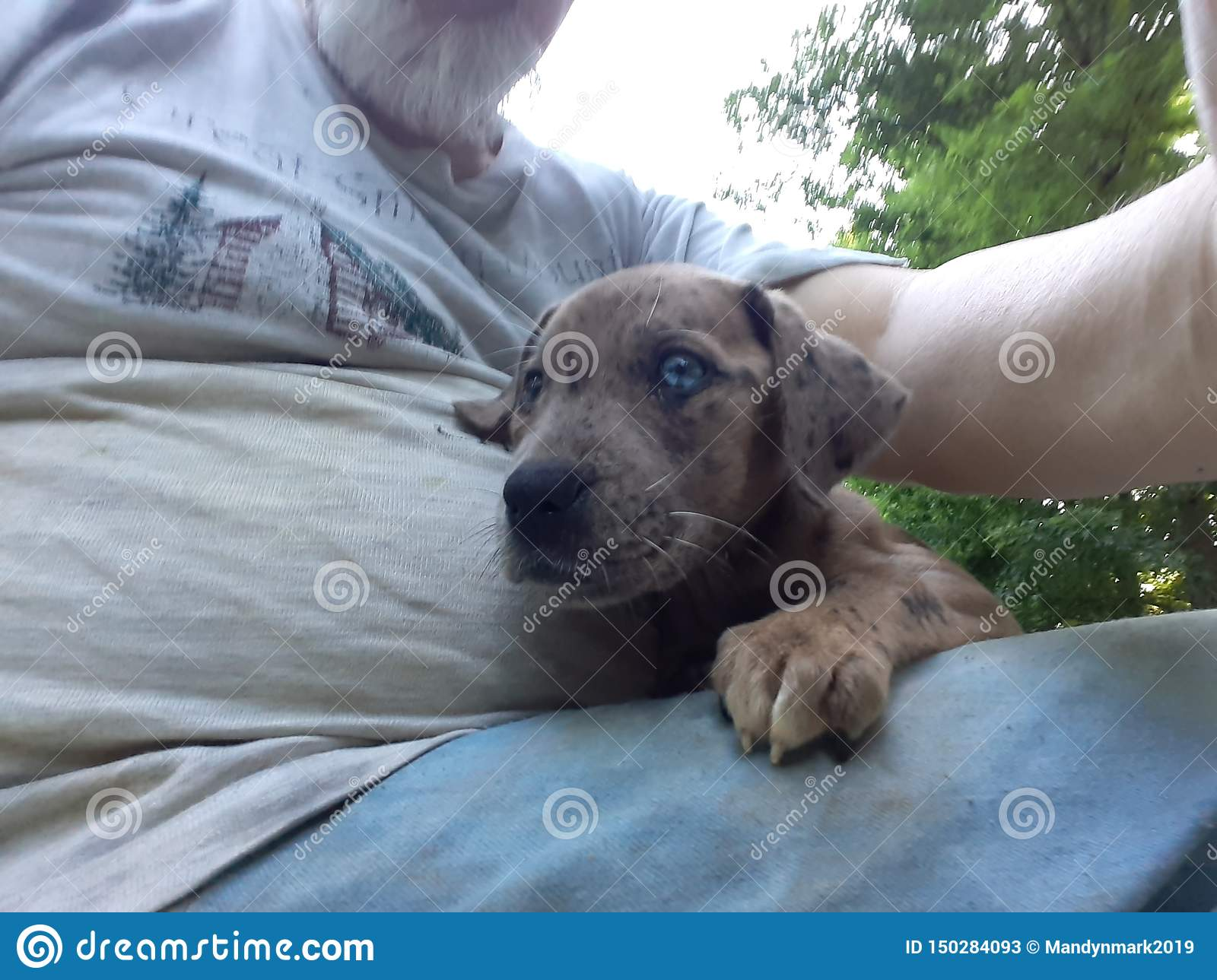 Cute Blue Eyed Puppy With A Cross In Her Eye Stock Image Image Of Puppy Eyed 150284093