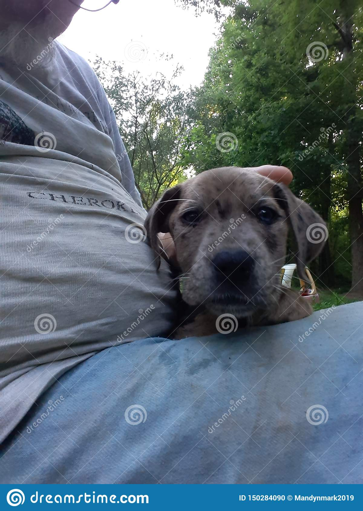 Cute Blue Eyed Puppy Stock Photo Image Of Puppy Cute 150284090