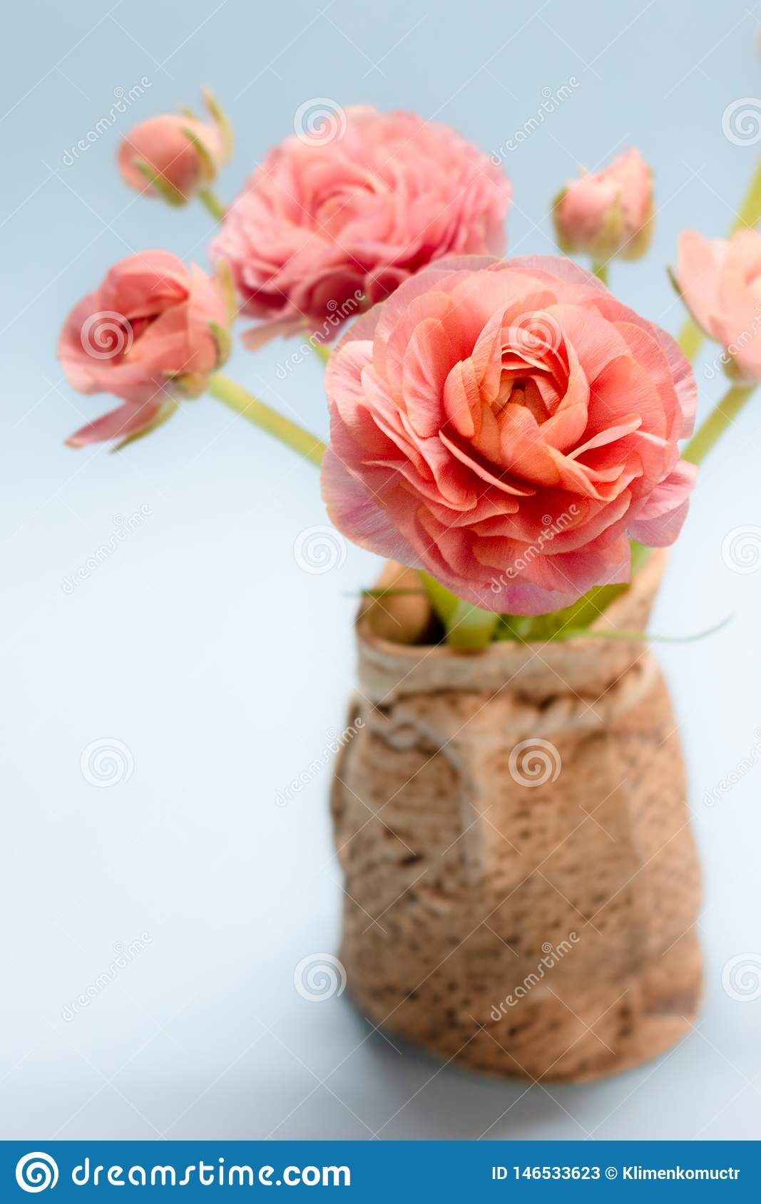Cute bouquet of gentle rose ranunculuses on a blue background