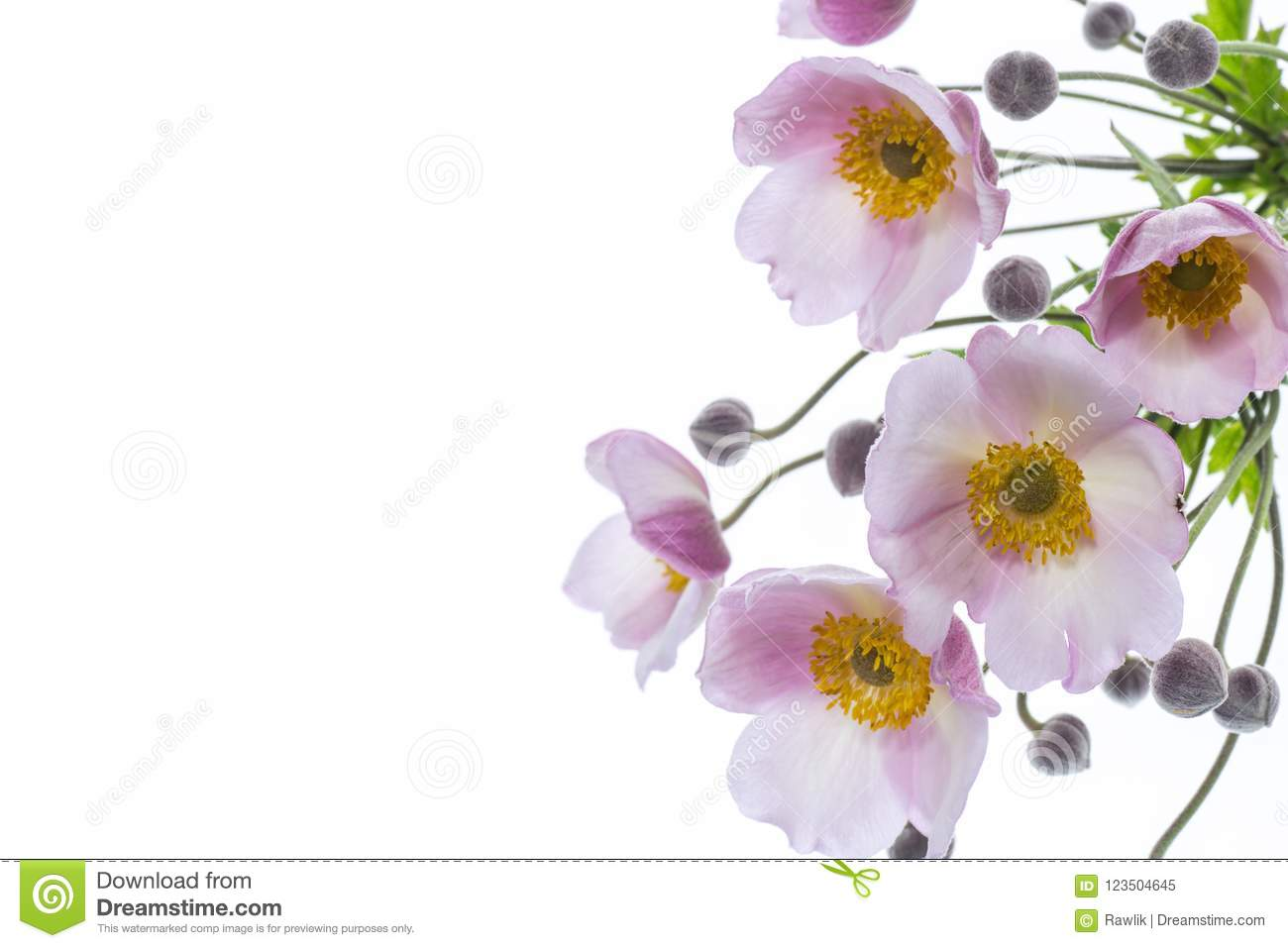 Cute Pink Flowers On A White Background Stock Image Image Of Happy