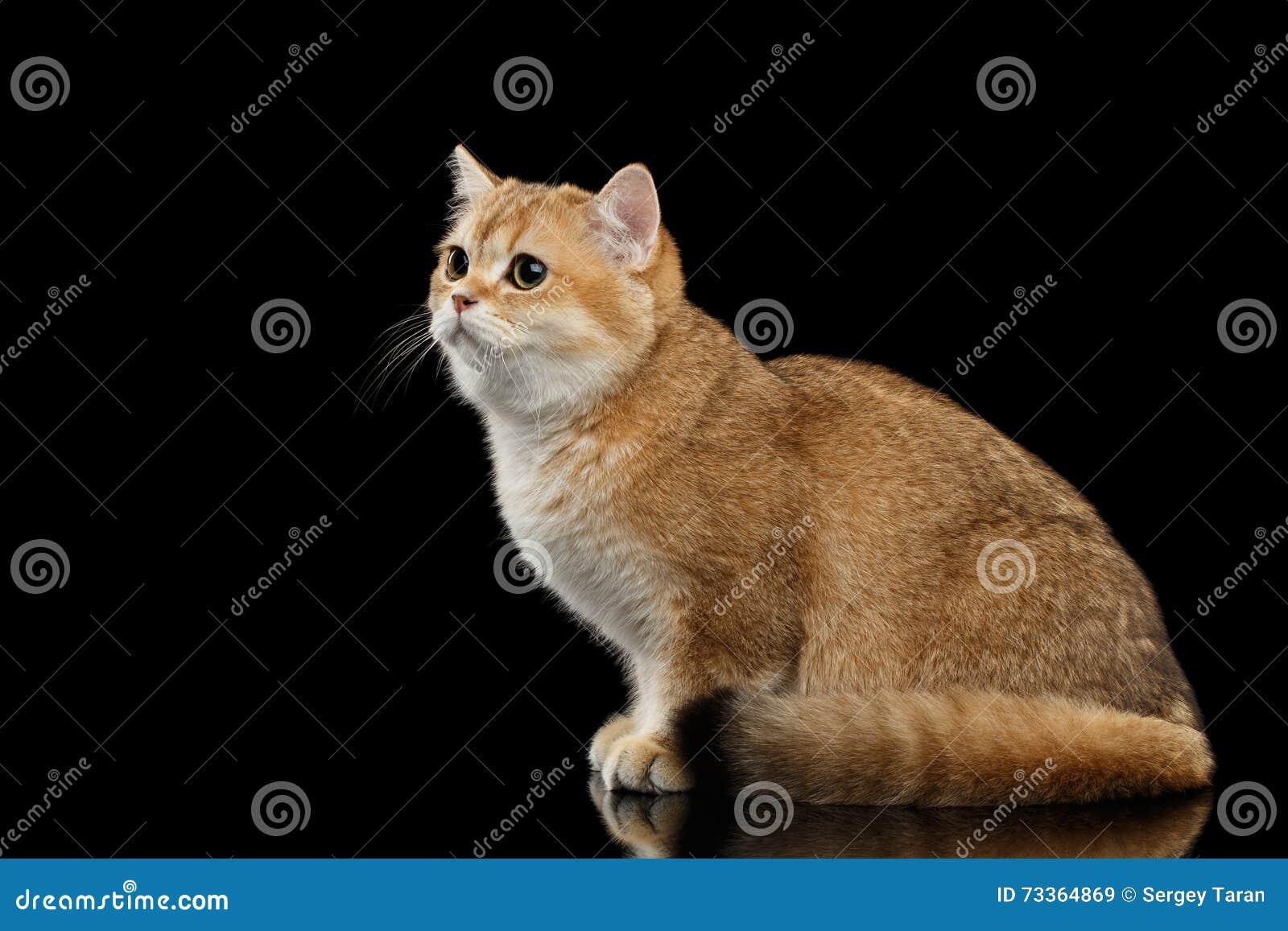rachael ray wet cat food