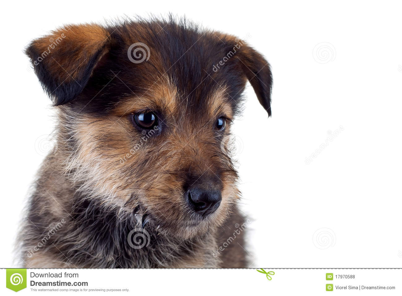 Cute Brown Puppy | www.pixshark.com - Images Galleries ...
