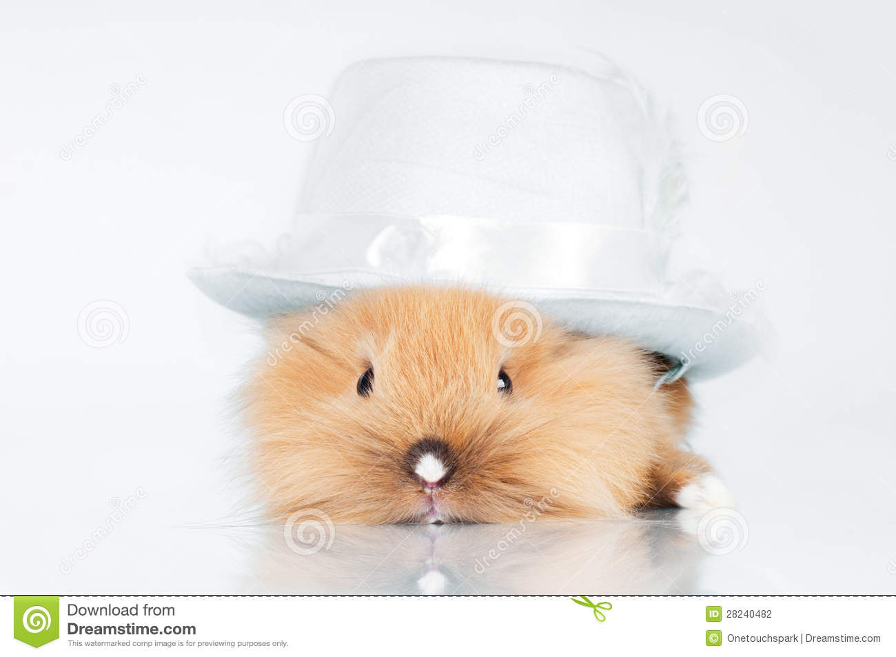 Cute bunny in a hat