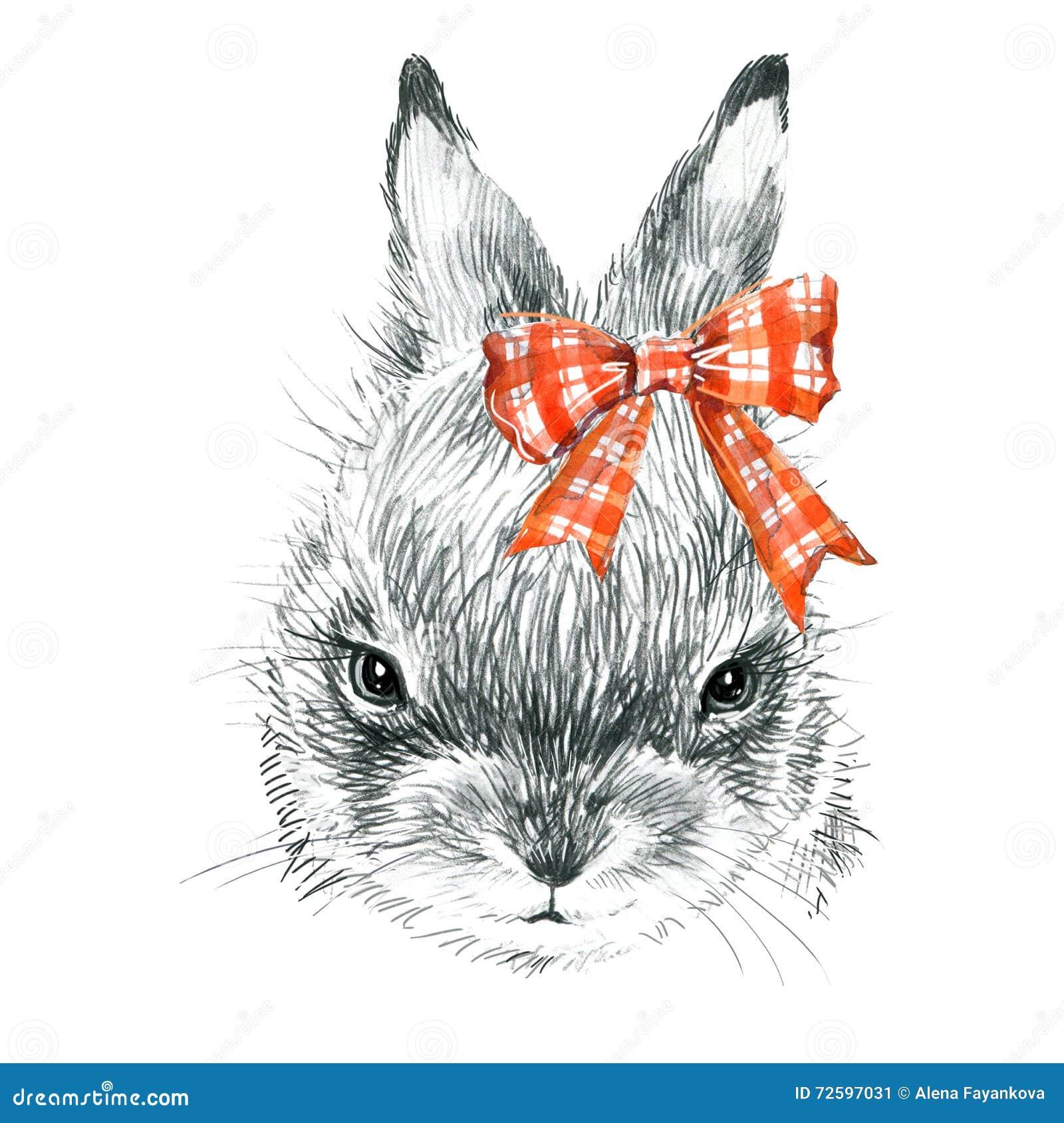 Cute Bunny Rabbit Pencil Sketch Illustration T Shirt Print With