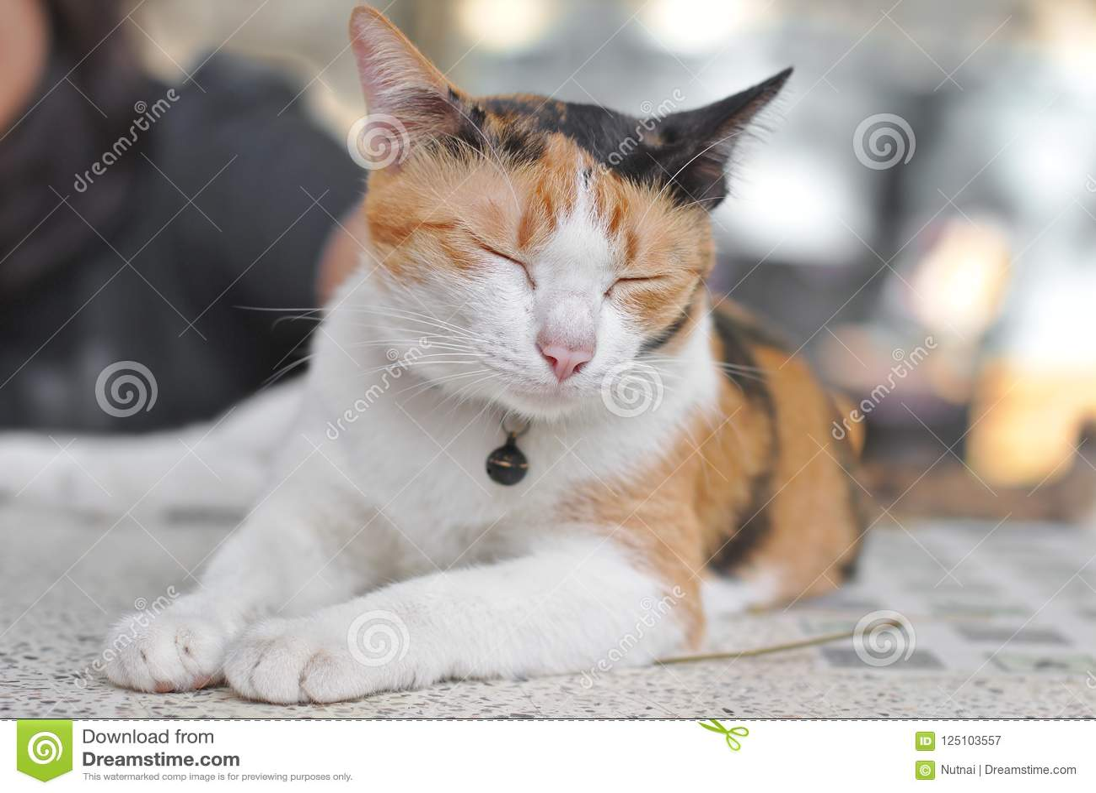 da77a53c8f2 Calico Cat, Cute Tortoiseshell Cat Sleeping Stock Image - Image of ...