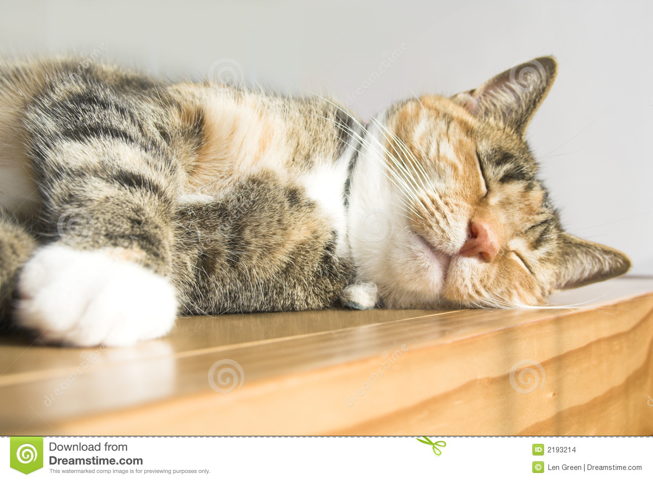 Cute Cat Stock Images Image 2193214