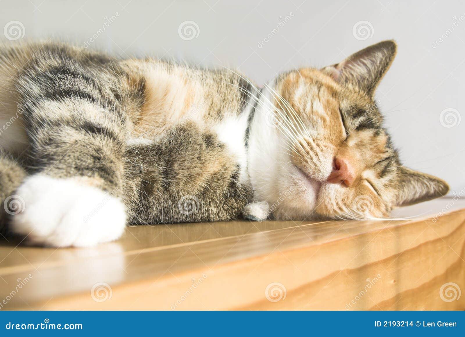 cute cat stock photo. image of feline, doze, dozing, dreams - 2193214