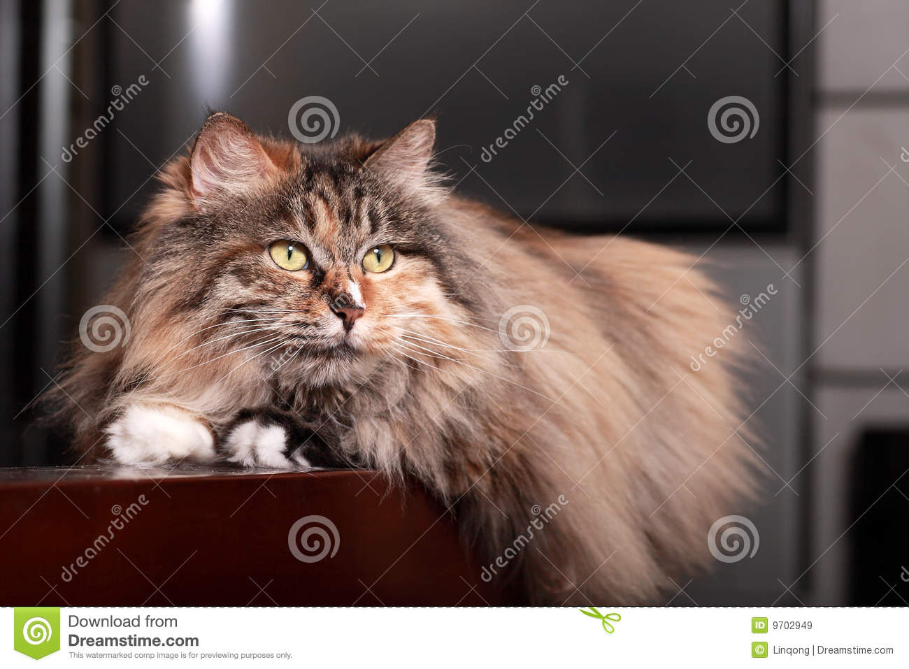 Cute cat royalty free stock images image 9702949 for Having an indoor cat