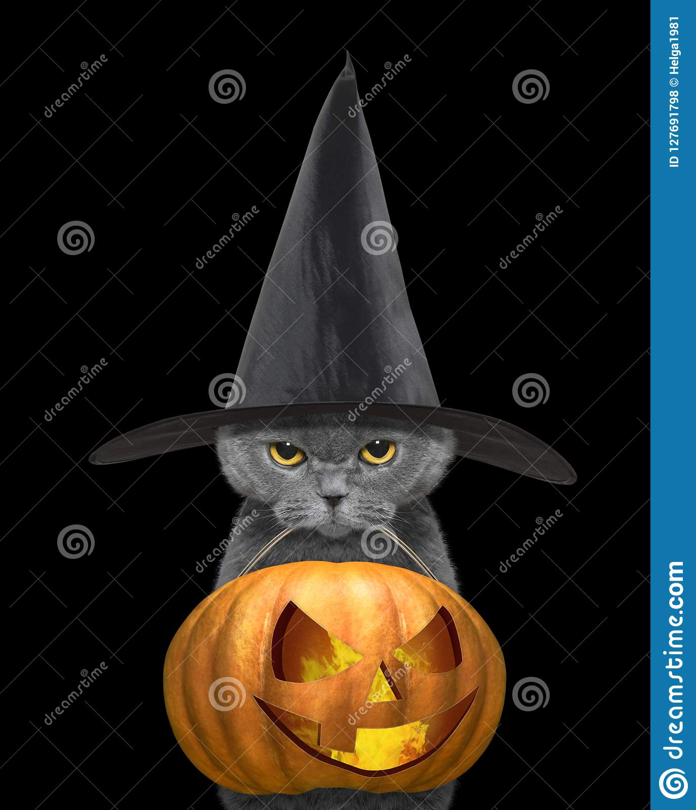 c625b278 Cute Cat In Black Hat Hold Halloween Pumpkin In The Mouth - On Black ...