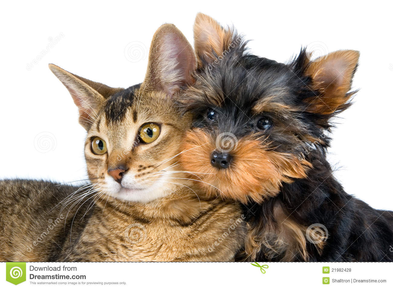 Cute Cat And Dog Stock Photo Image Of Friends Heads