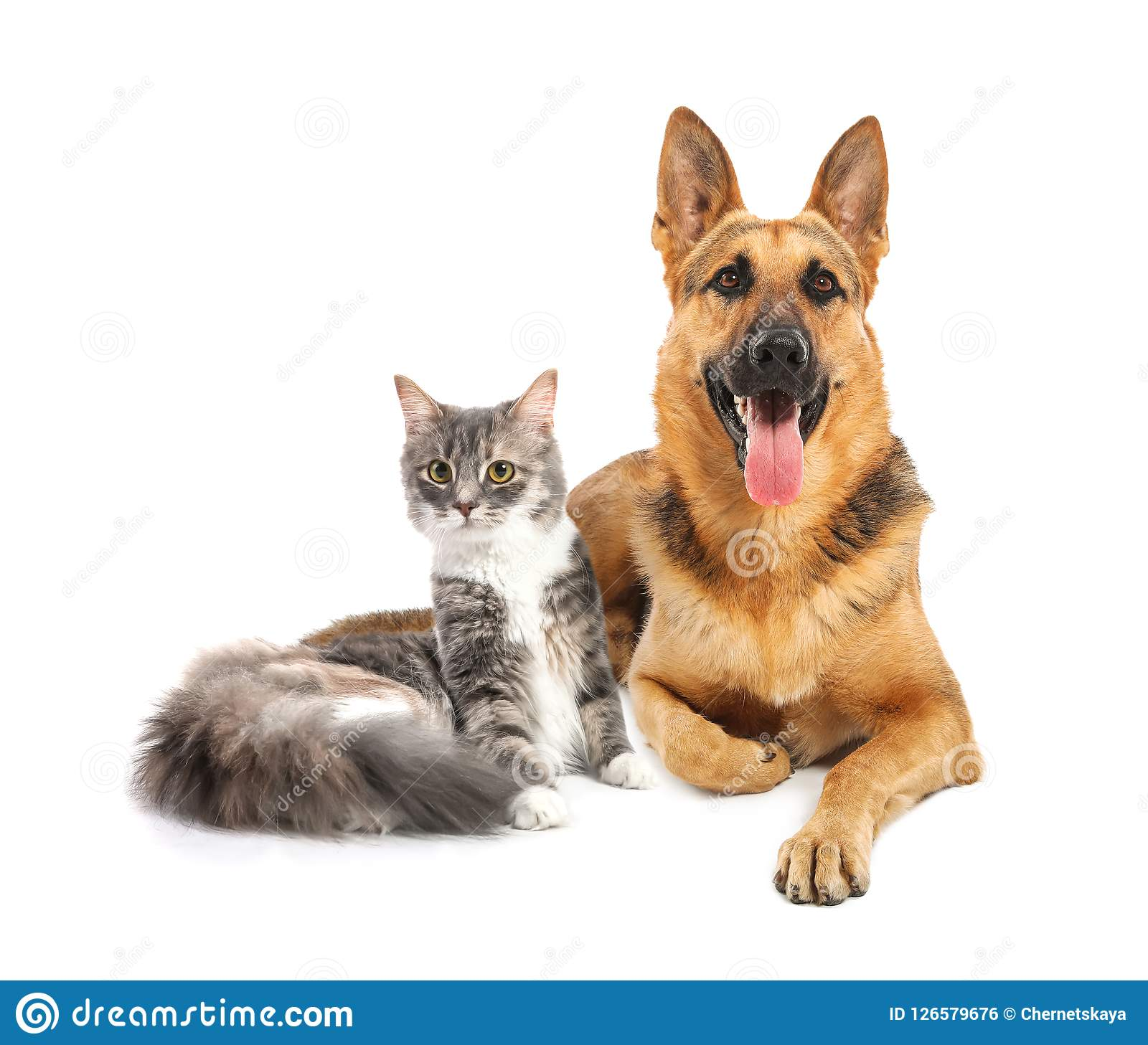 Cute Cat And Dog Together On White Background Stock Photo Image Of