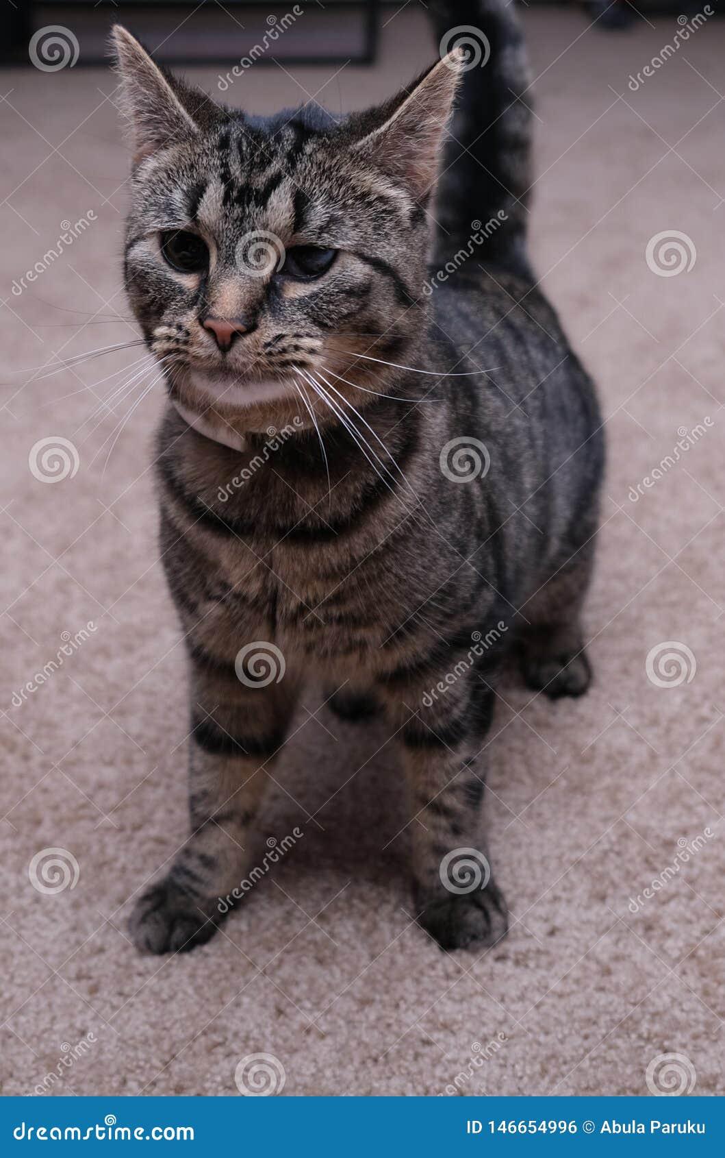 Cute Cat Indoors With Dark Eyes