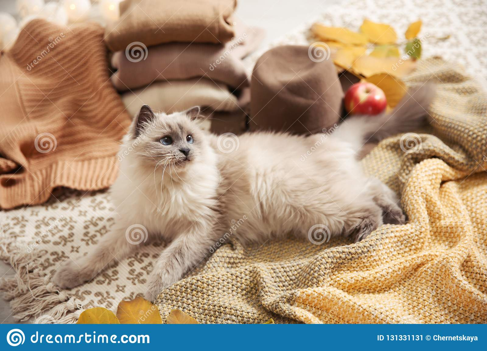 Cute cat with knitted blanket on floor at home