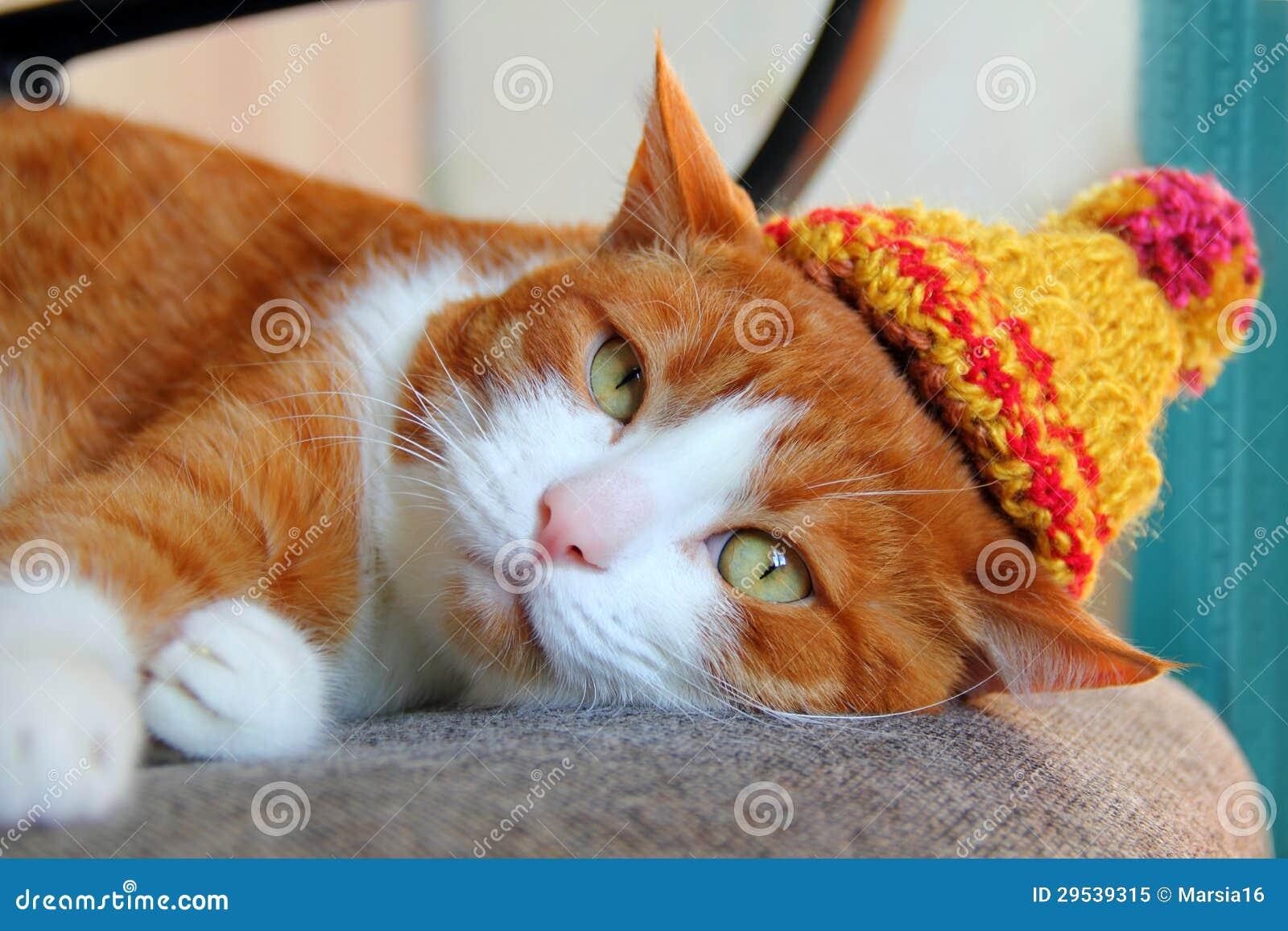 Cute cat in a knitted hat