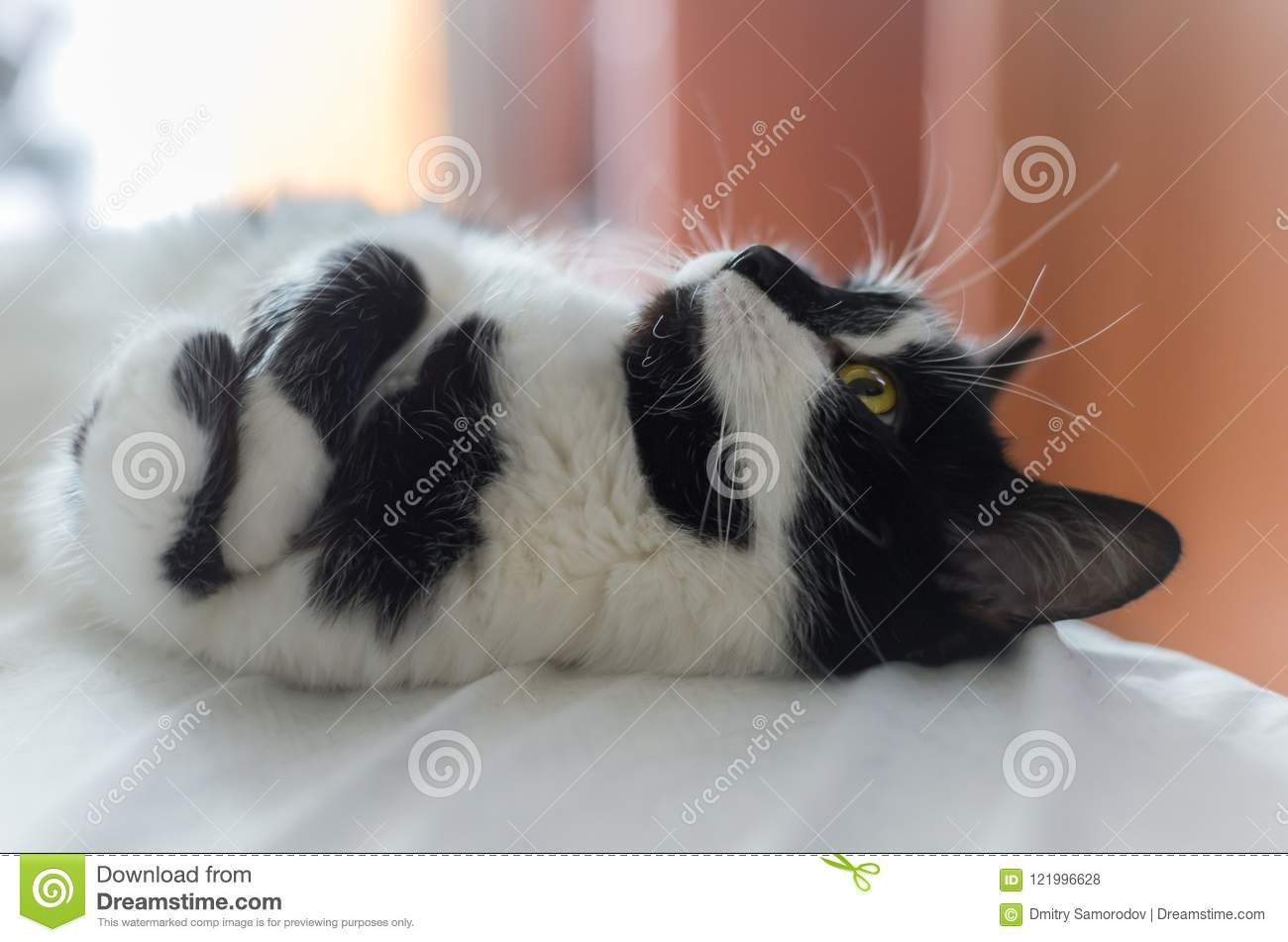 Cute cat lies on the bed and dreaming about a bird