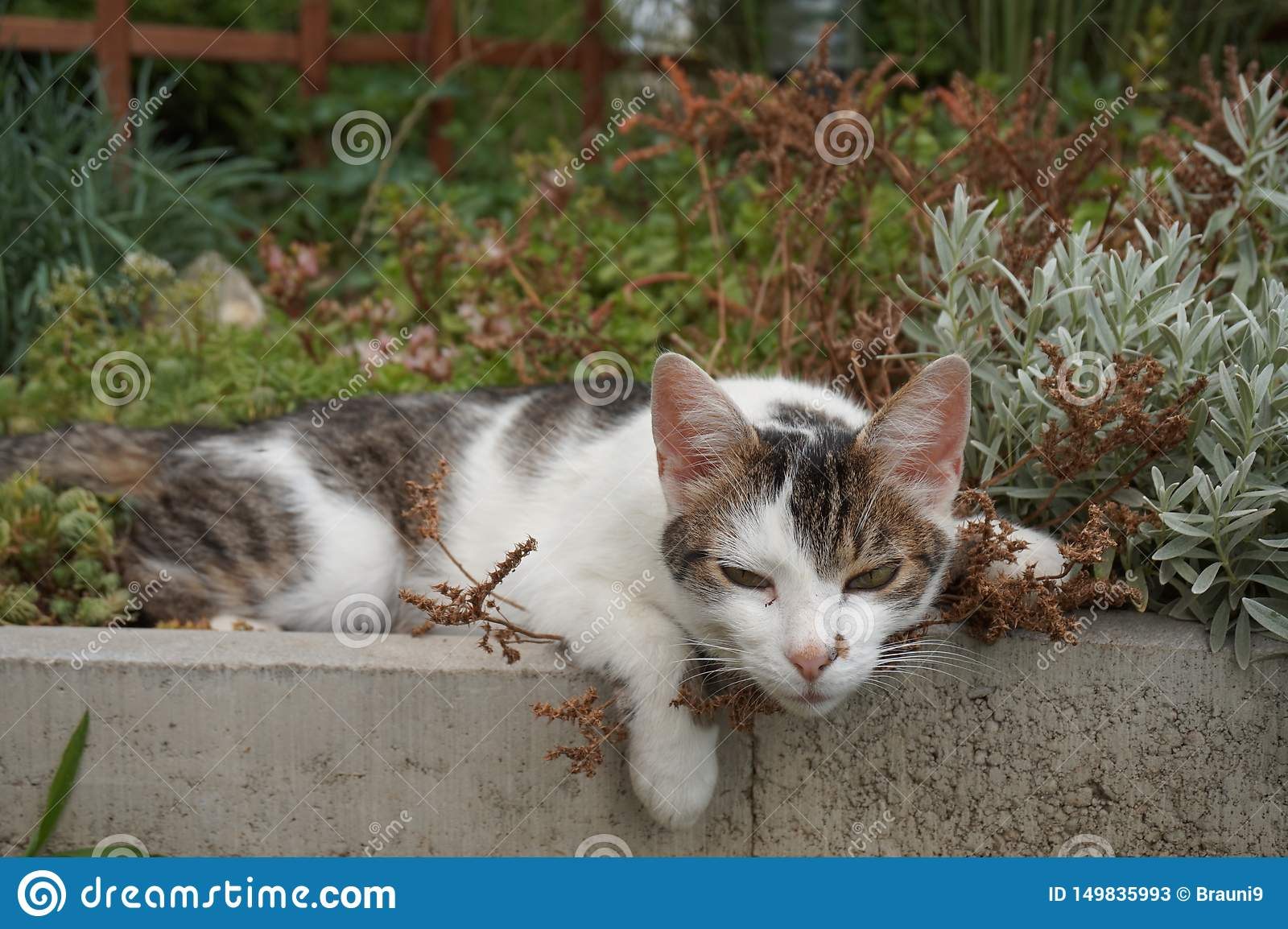 Cute Cat lies in a flower bed and fully relaxed