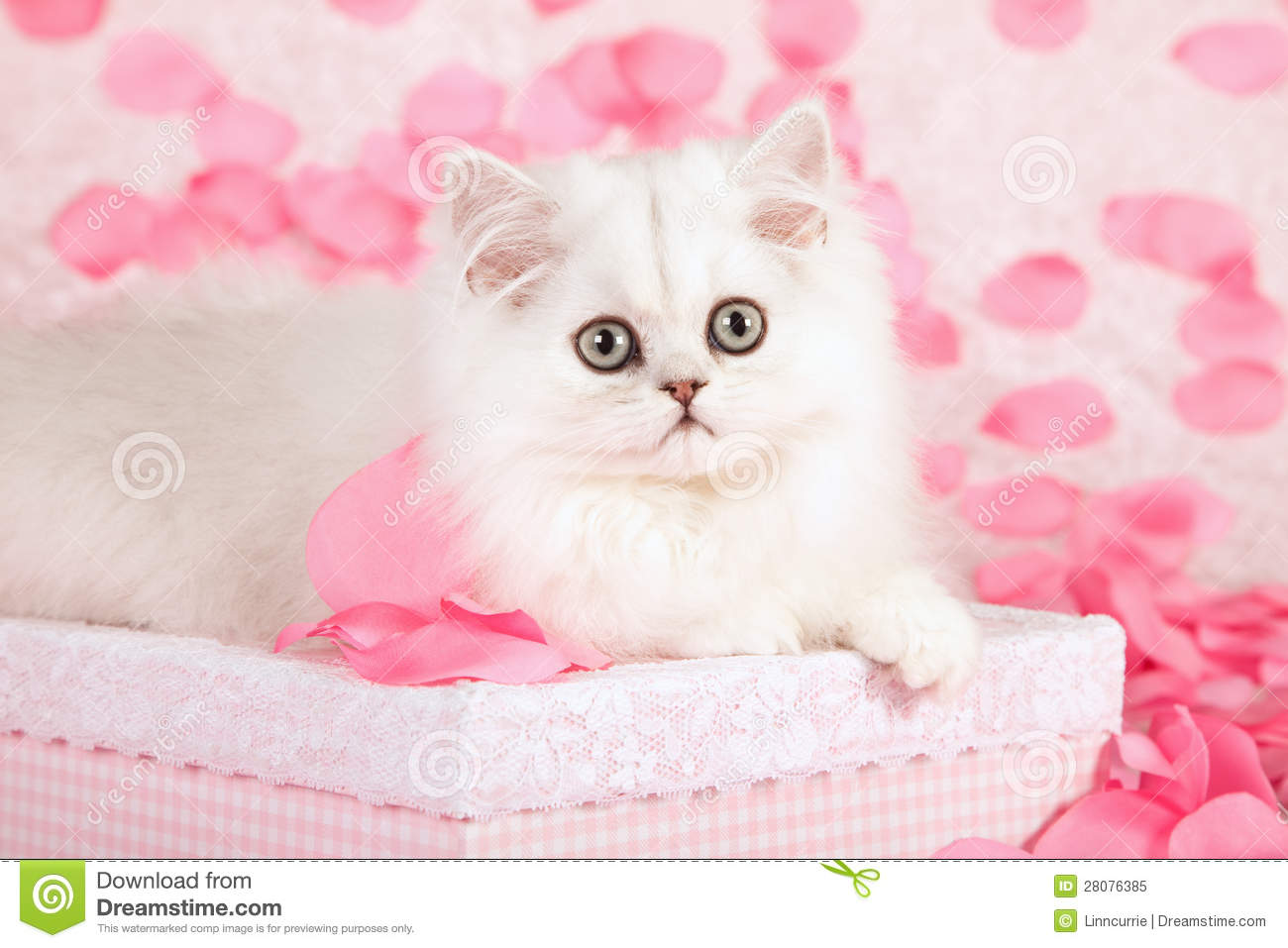 cute cat and pink petals stock image. image of love, staring - 28076385
