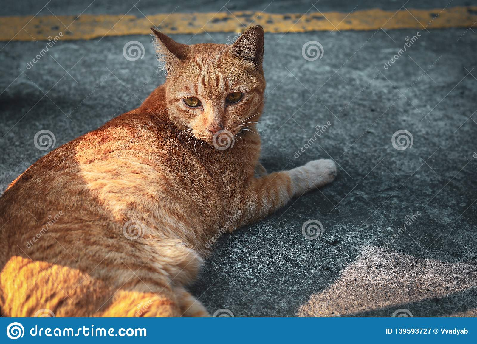 Cute cat portait sleeping on the floor.Kitten looking someting.Cat with tiger striped relaxing