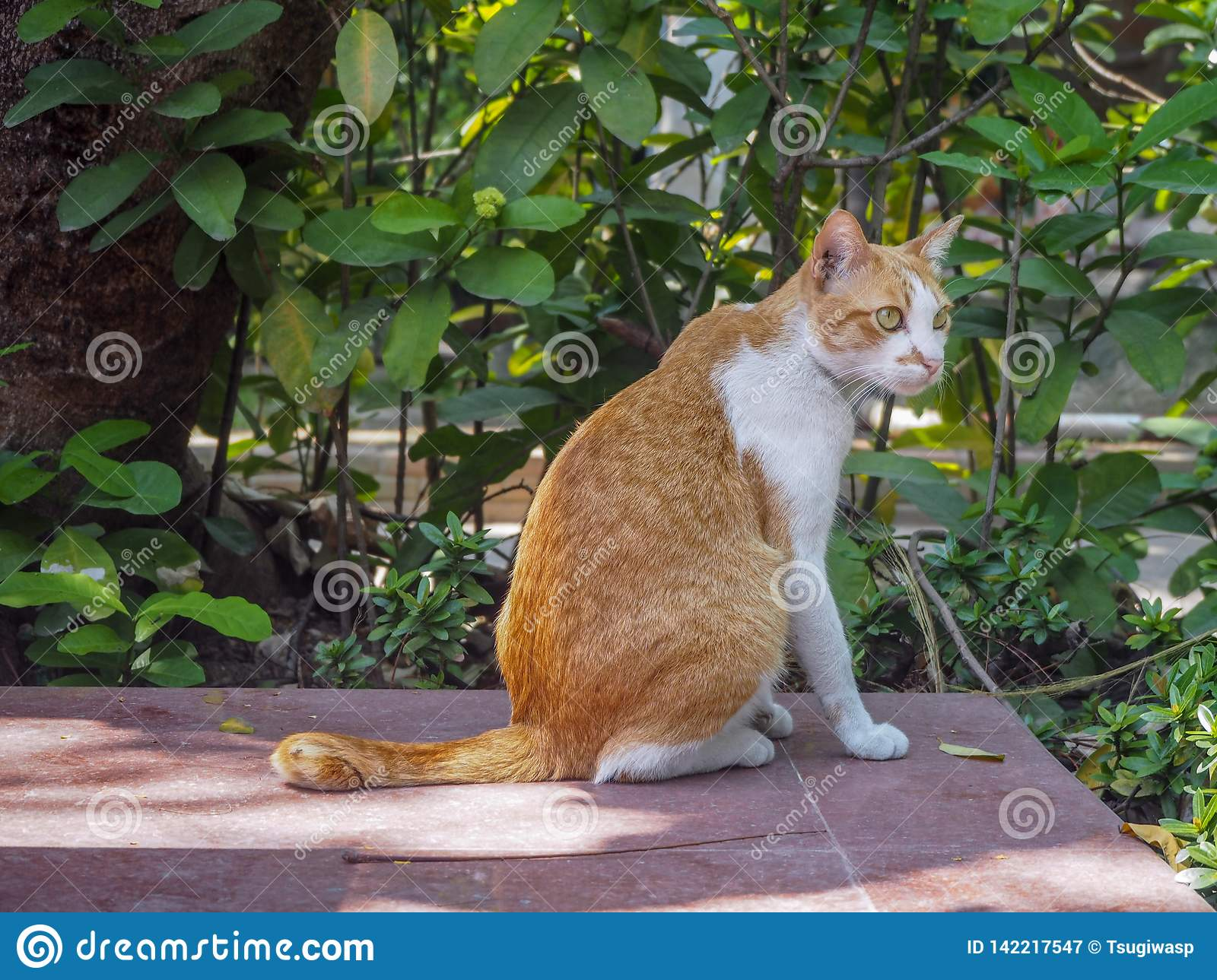 Cute cat sitting on the tile floor with leaves background