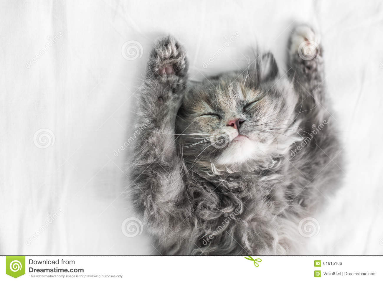 Cute cat sleeping on the bed