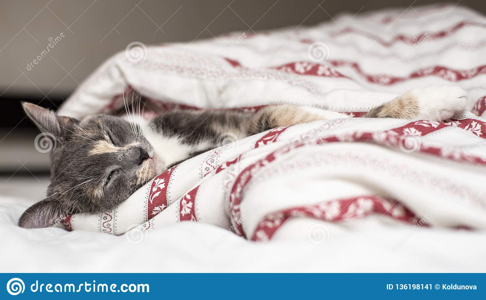 Cute cat sleeping on a bed wrapped in a blanket