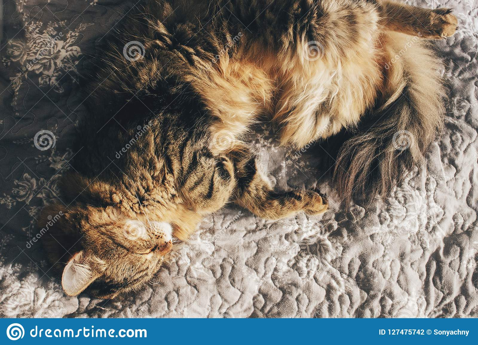 Cute cat sleeping on comfortable bed in morning light in stylish