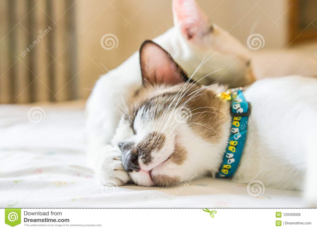 Cute cat is sleeping On a white background Soft-focus image.