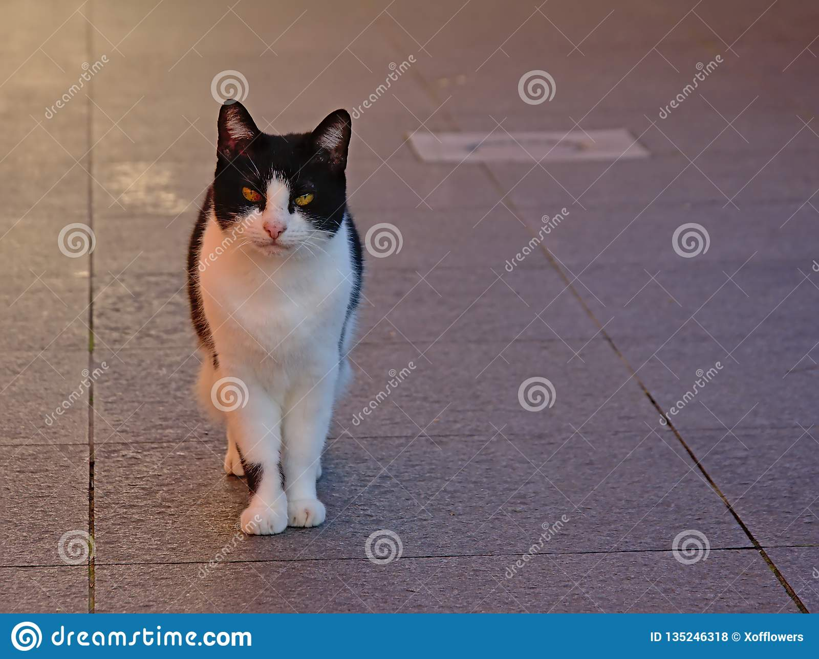 Cute cat standing on a terace