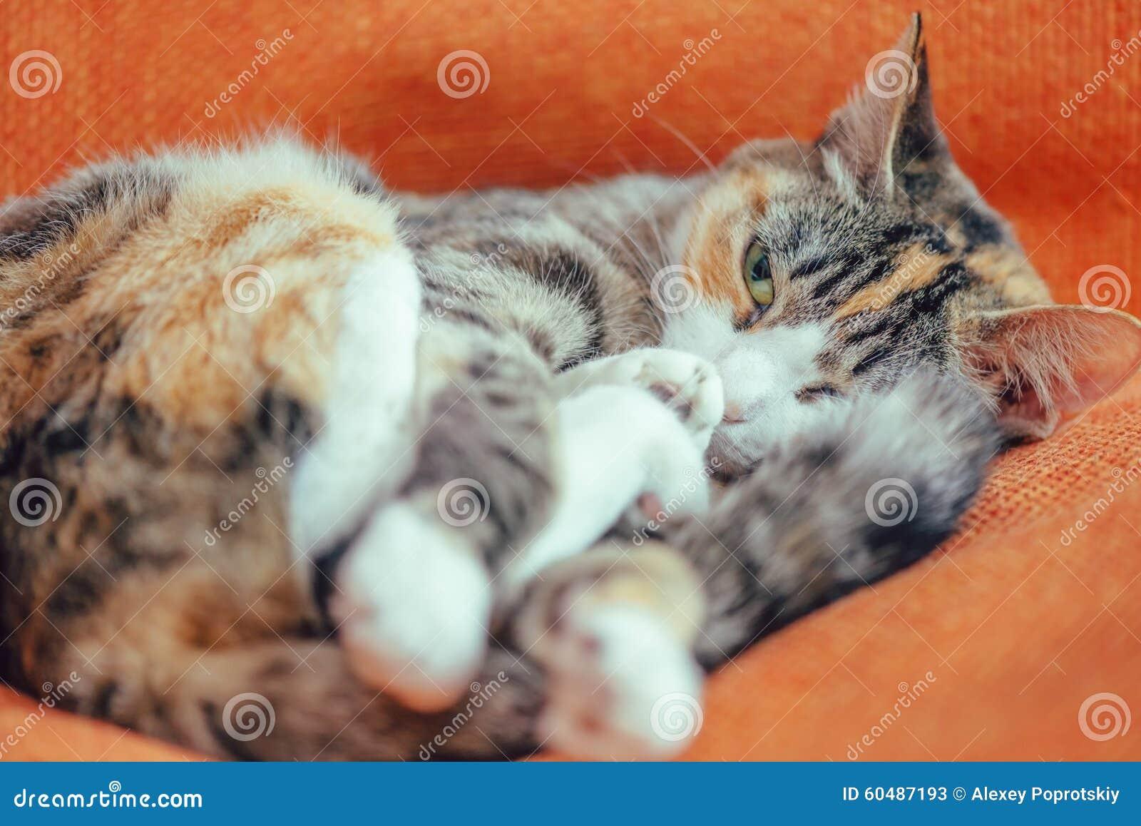 Cute cat of tortoiseshell color
