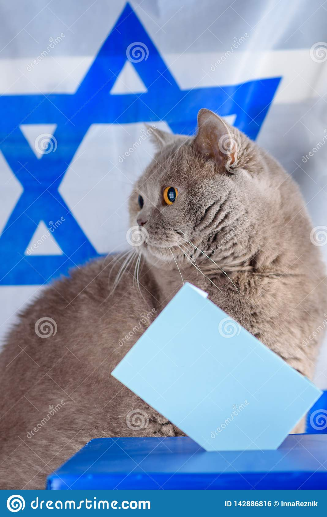Cute cat, Vote box and ballot in a ballot box on election day over Israel flag background.