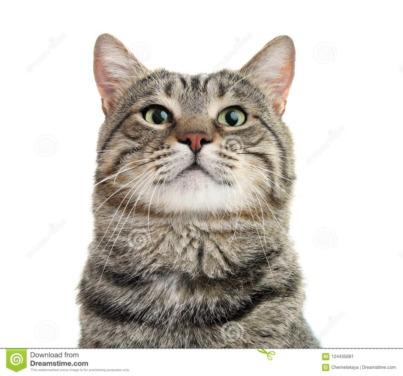 Cute Cat On White Background Stock Image Image Of