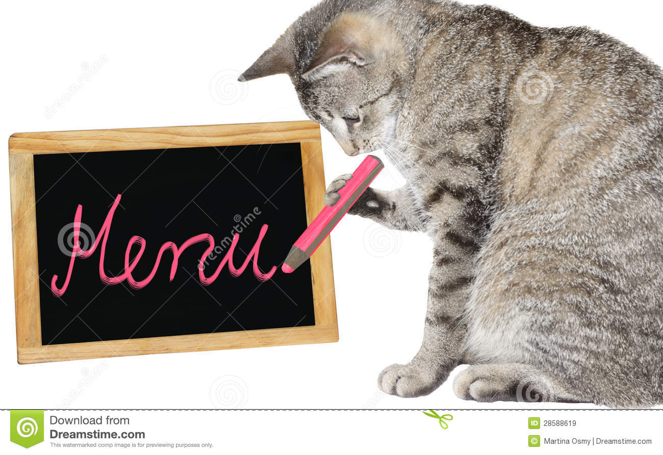 cute cat writing on a menu board stock image image  cute cat writing on a menu board