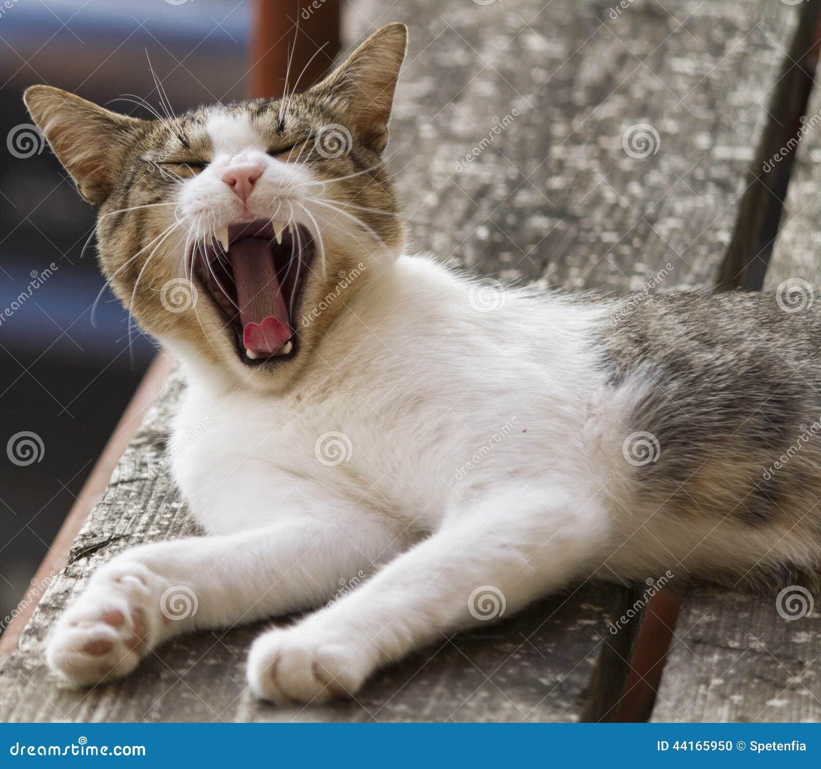 Cute Cat Yawning Stock Photo - Image: 44165950