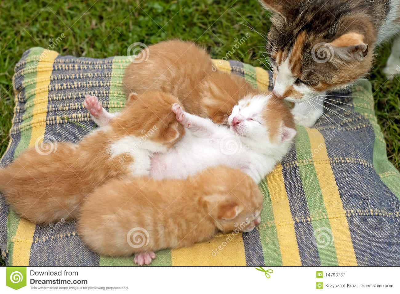cute cats stock image. image of whiskers, animal, small - 14793737