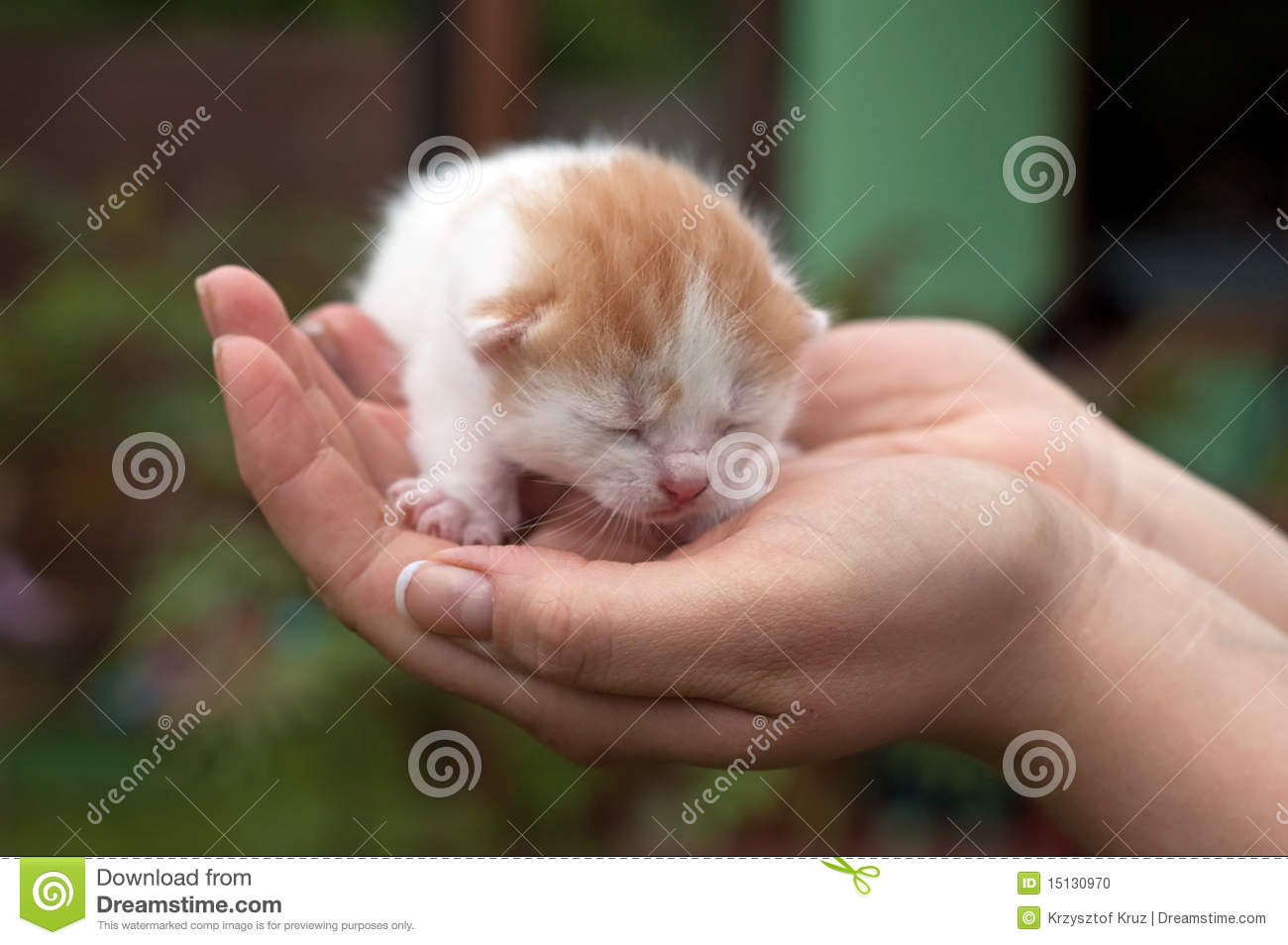Cute Cats Stock Photo - Image: 15130970