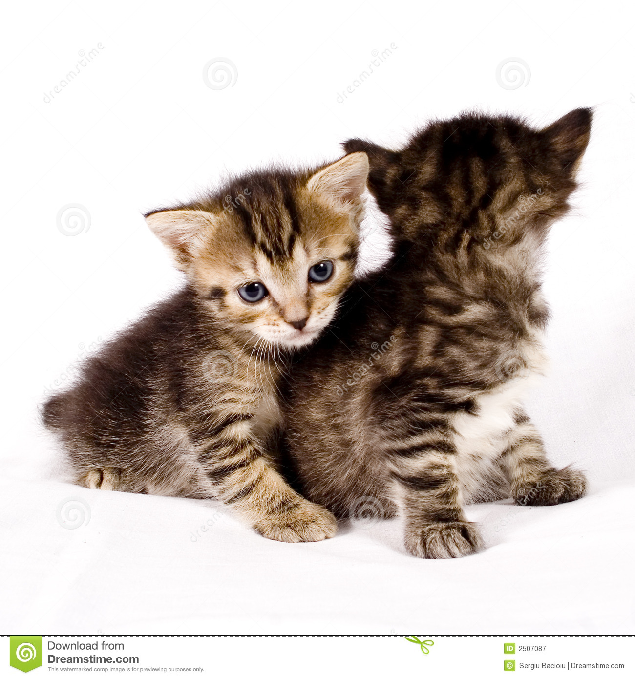 Cute Cats Royalty Free Stock Photography - Image: 2507087