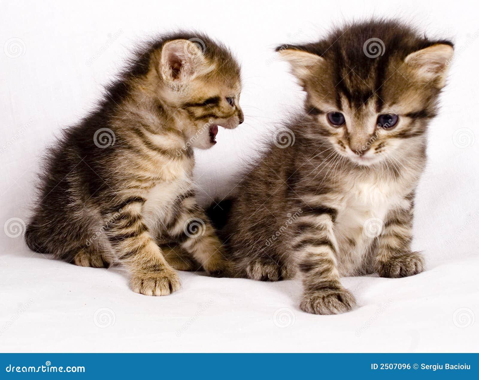 Beach chair beach chair clipart - Cute Cats Royalty Free Stock Image Image 2507096