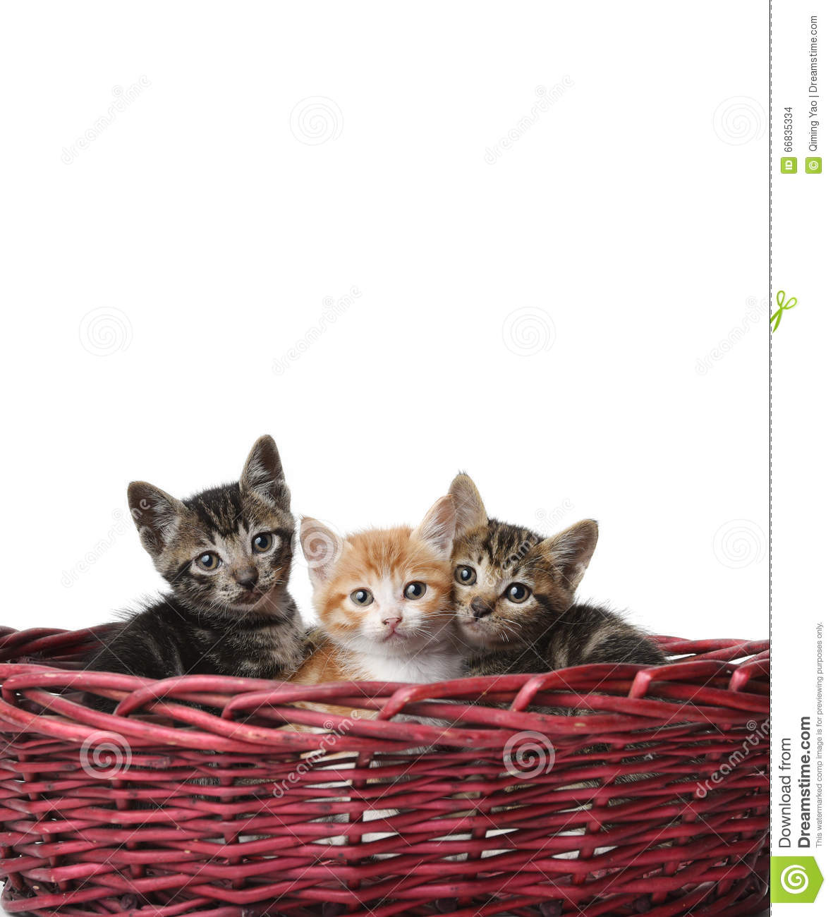 Cute Cats In The Basket Stock Photo - Image: 66835334