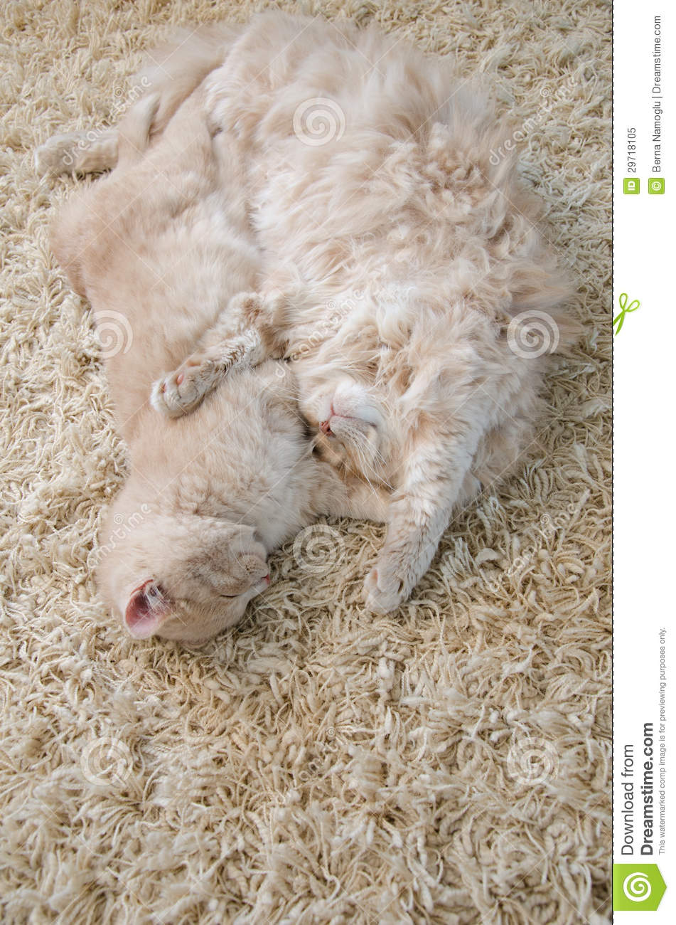 Cute Cats Royalty Free Stock Photo Image 29718105