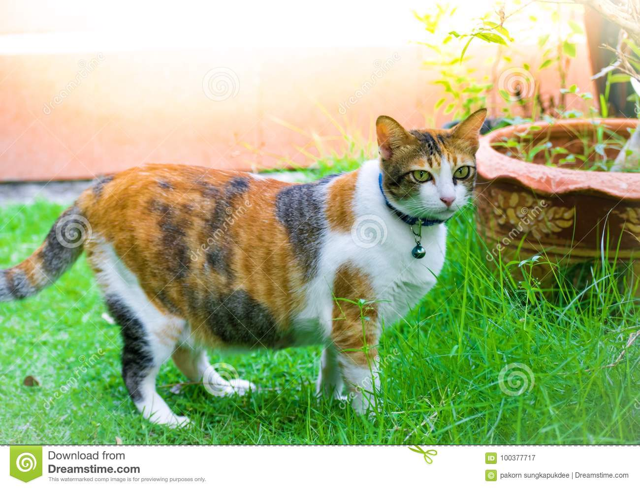 Cute Cats Are Playing In The House On Lawn Using Wallpaper Or
